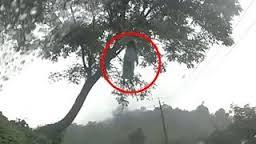 fantoma din copac