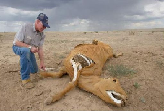 cattle-mutilation