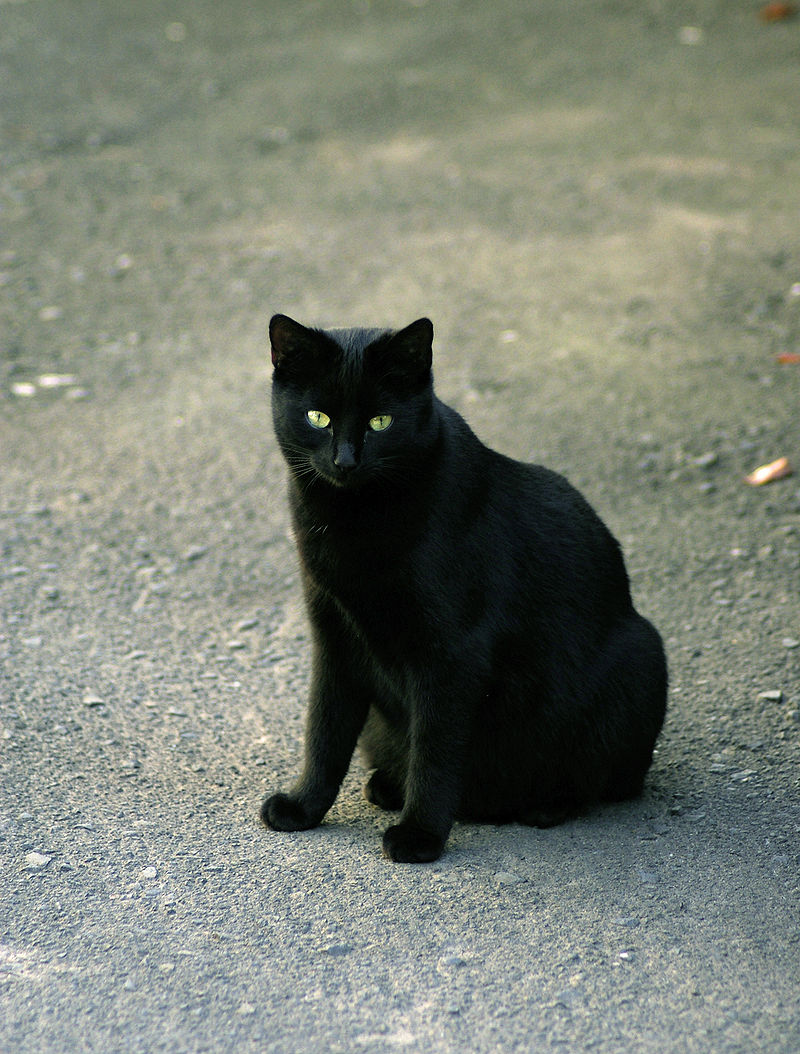 Pisica neagră în vrăjitoria Evului Mediu